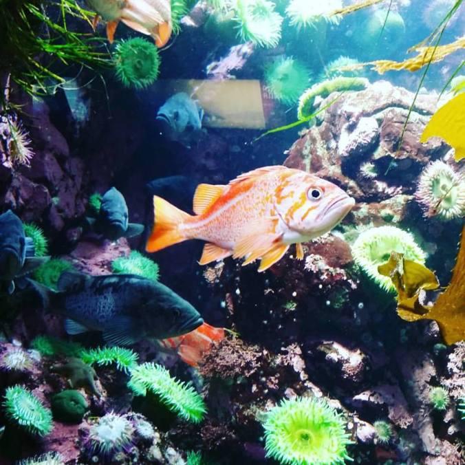 OrangeFish_instagram